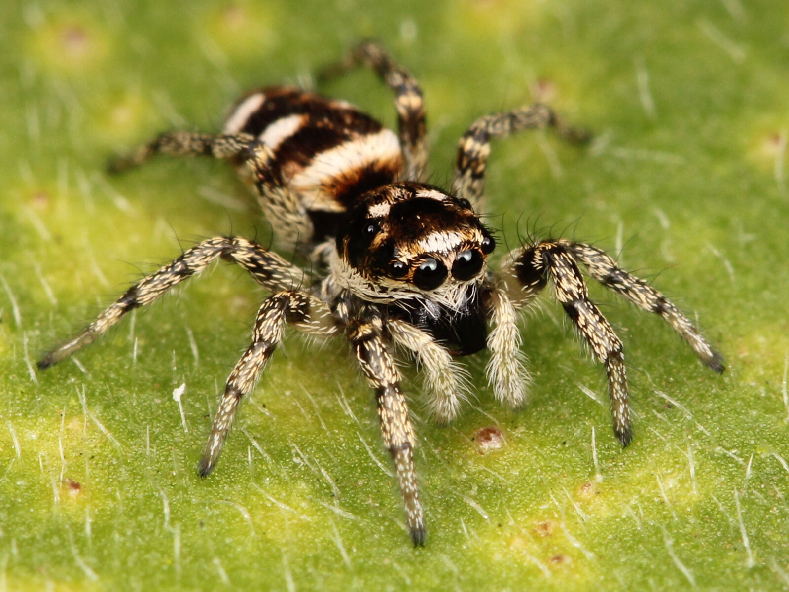 Tlc naturals blog hair beauty care blog of tlc naturals for How to stop spiders coming in your home