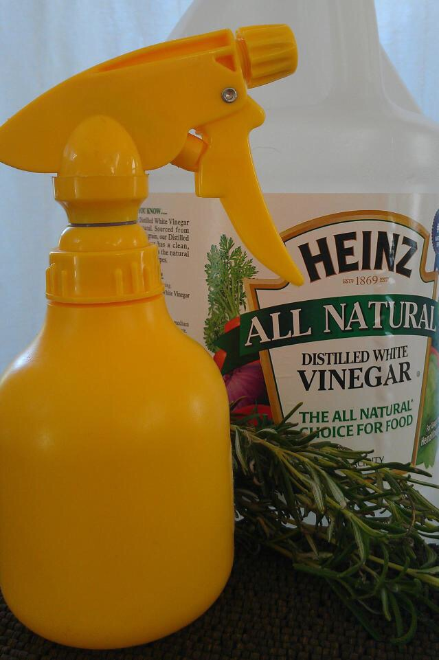natural, remedy, remedies, spider, house, home,  prevent, green, eco, cleaning, tips, ideas, family,  infestation, repellant, vinegar,